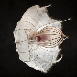 alexandra-hendrikoff-love-your-fears