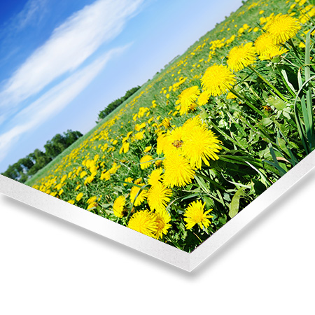 foto-auf-forex-platte